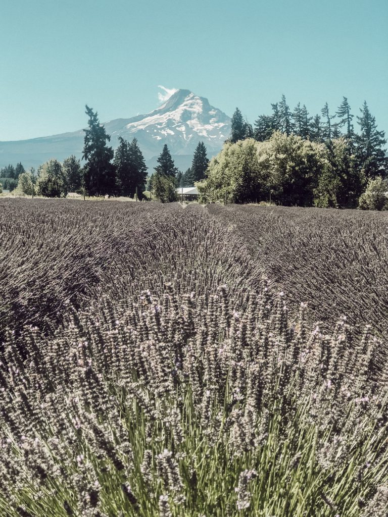 Lavender Valley Farm