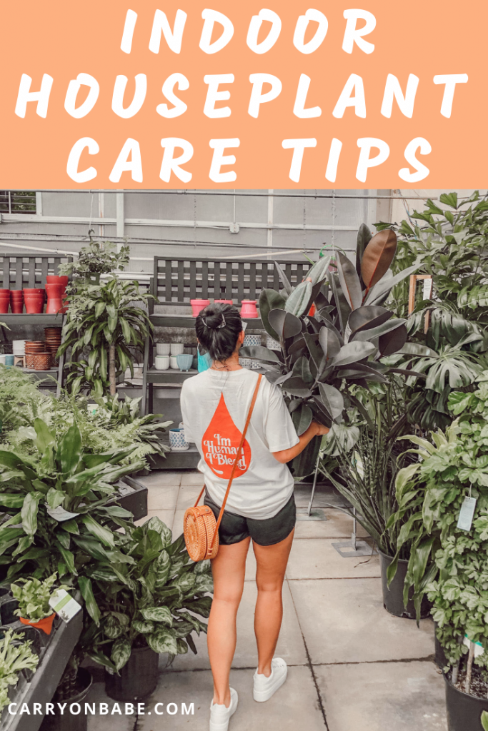 Indoor House Plant Care Tips
