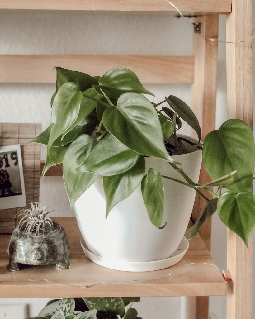 Easy Indoor Houseplants and How to Care for Them