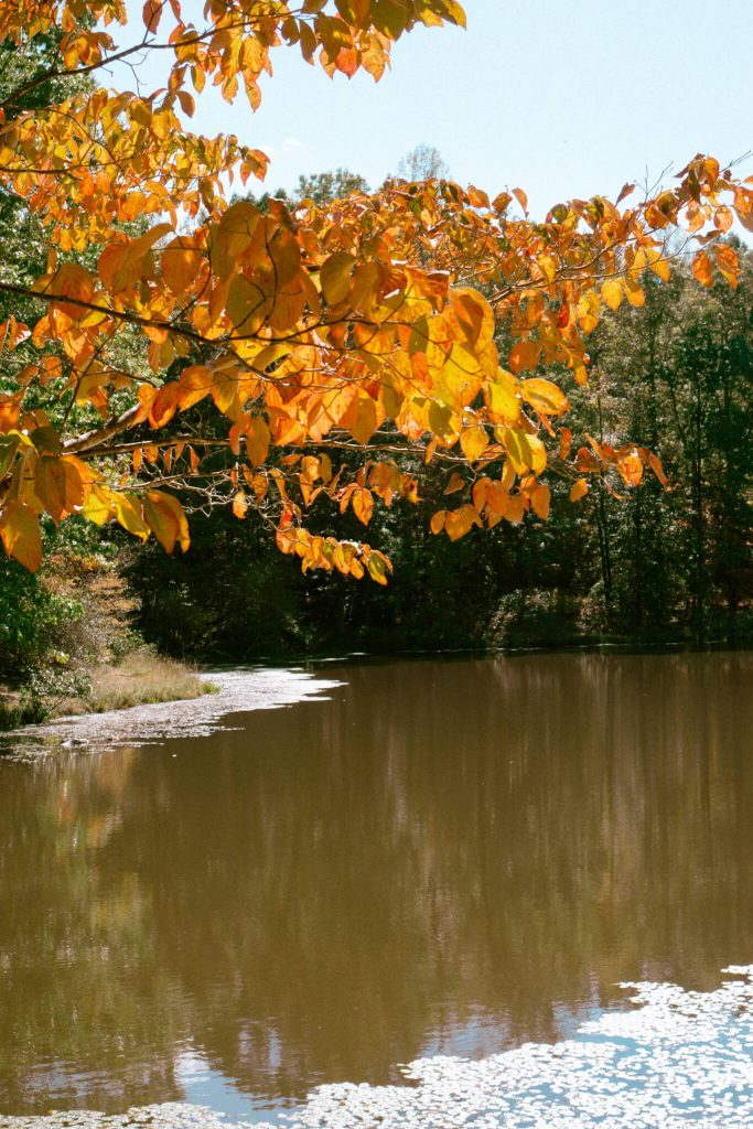 autumn vibes nc