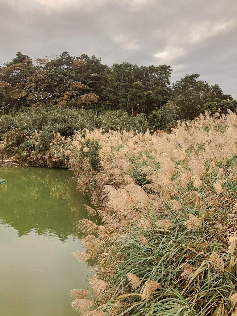 maokong tea plantation